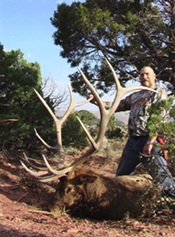 Exceptional Colorado Bull