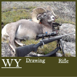 WY100Sheep